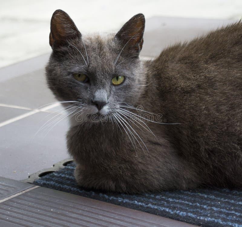 Gato que se sienta en el felpudo imagen de archivo libre de regalías