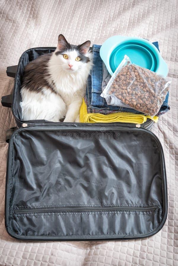 Gato que se sienta en la maleta foto de archivo libre de regalías