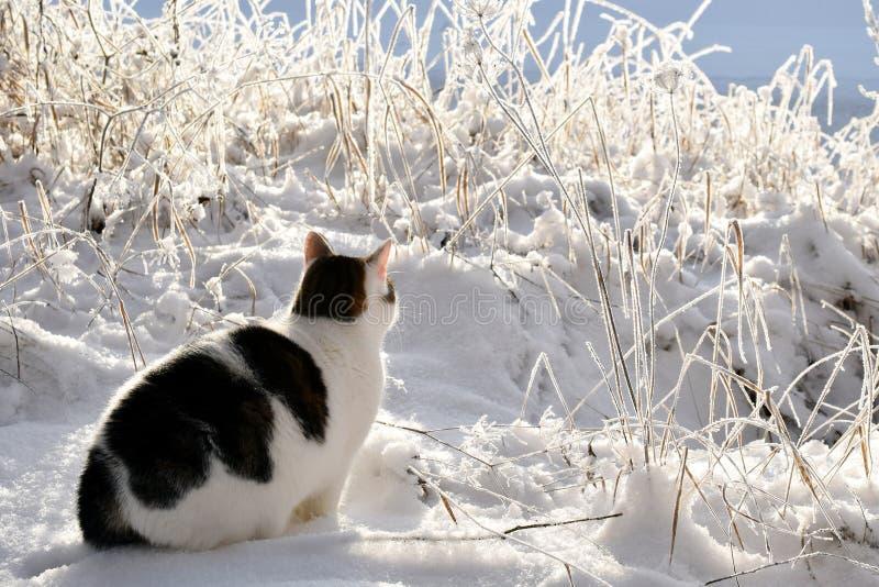 Gato que se sienta en la nieve imagen de archivo