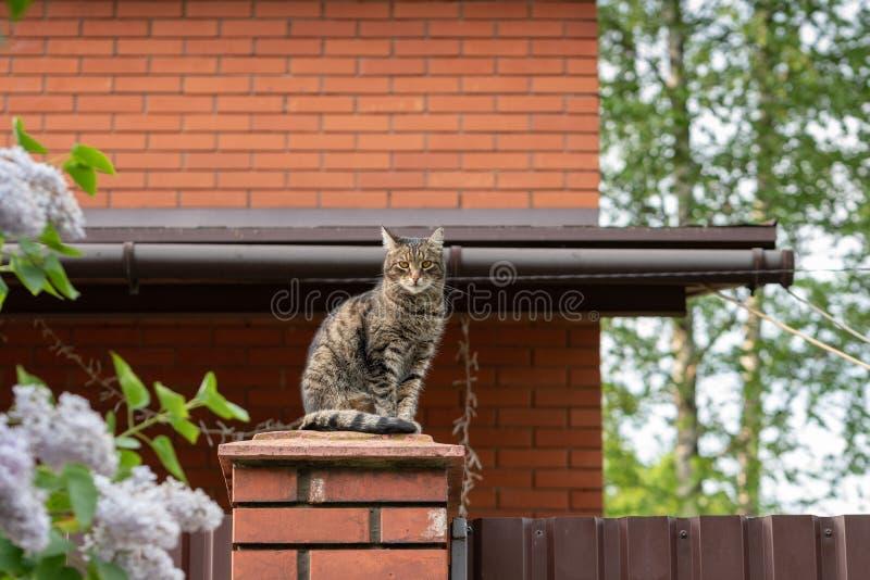 Gato que se sienta en un poste de la cerca del ladrillo rojo en el fondo de una casa del ladrillo Copie el espacio foto de archivo