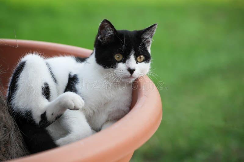 Gato que se sienta en un pote de la planta fotos de archivo libres de regalías