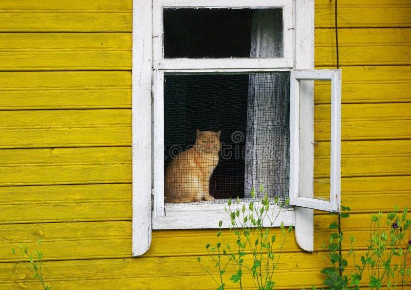 Gato que se sienta en un travesaño de la ventana fotos de archivo