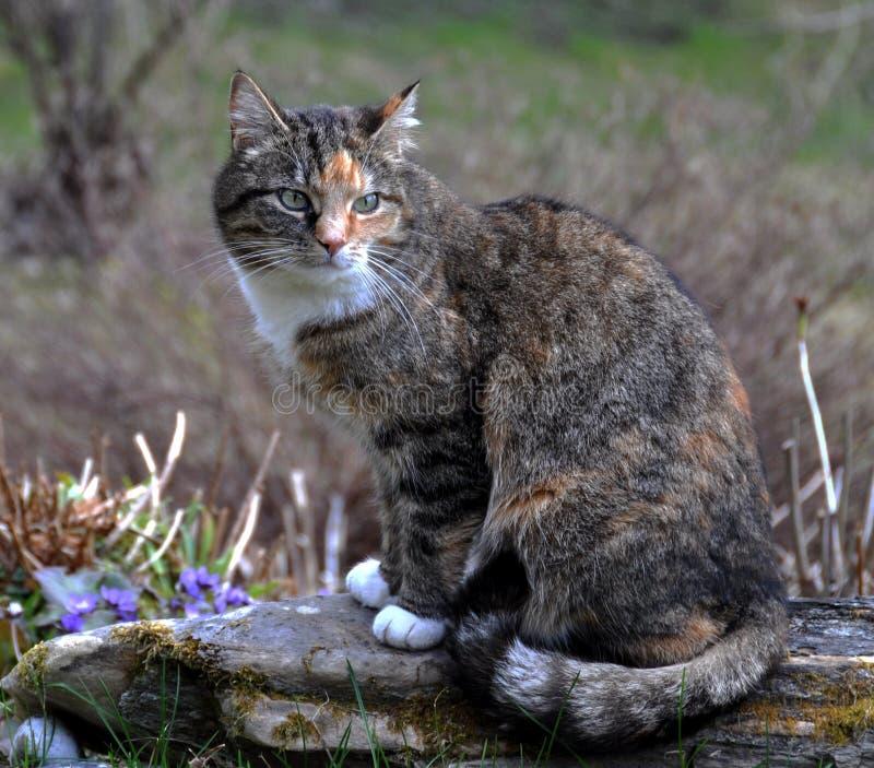 Gato que se sienta en una piedra imagen de archivo