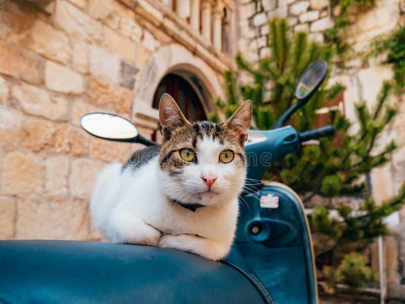 Gato que se sienta en una vespa En la ciudad vieja de Trogir, cerca de la fractura, fotografía de archivo