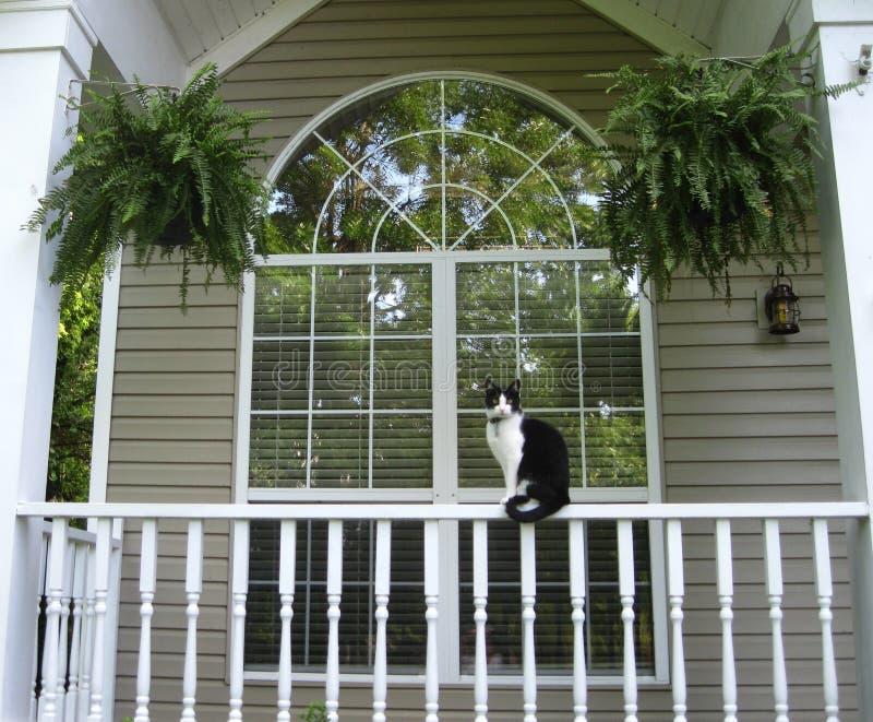 Gato que senta-se em Front Porch Rail da casa imagens de stock