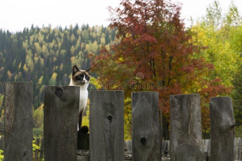 Gato que senta-se em uma cerca fora no outono imagens de stock royalty free