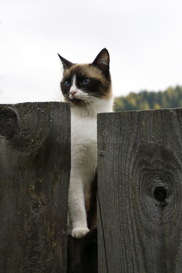 Gato que senta-se em uma cerca fora no outono imagem de stock royalty free