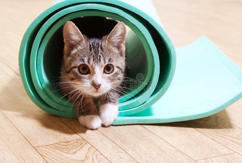 Gato que senta-se em uma esteira da ioga