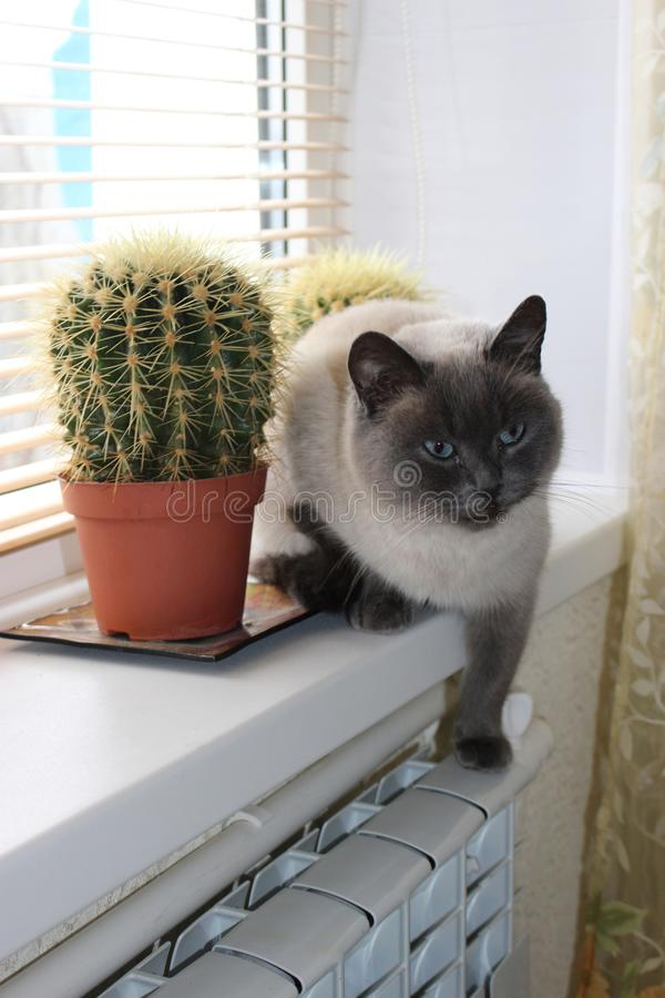 Gato que senta-se em uma janela perto do cacto fotografia de stock