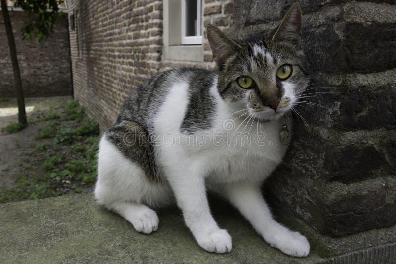 Gato que senta-se em uma parede imagem de stock
