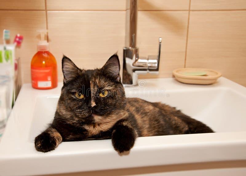 Gato que senta-se na bacia de lavagem foto de stock royalty free