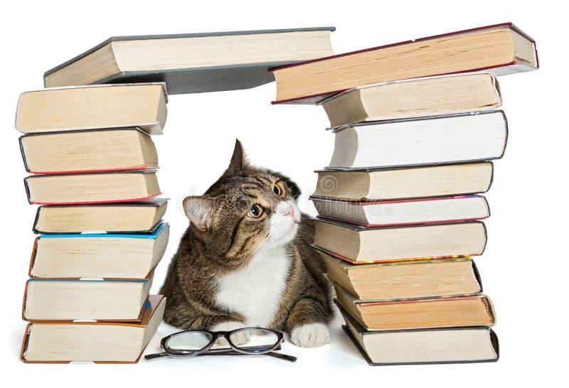 Gato que senta-se na casa dos livros foto de stock
