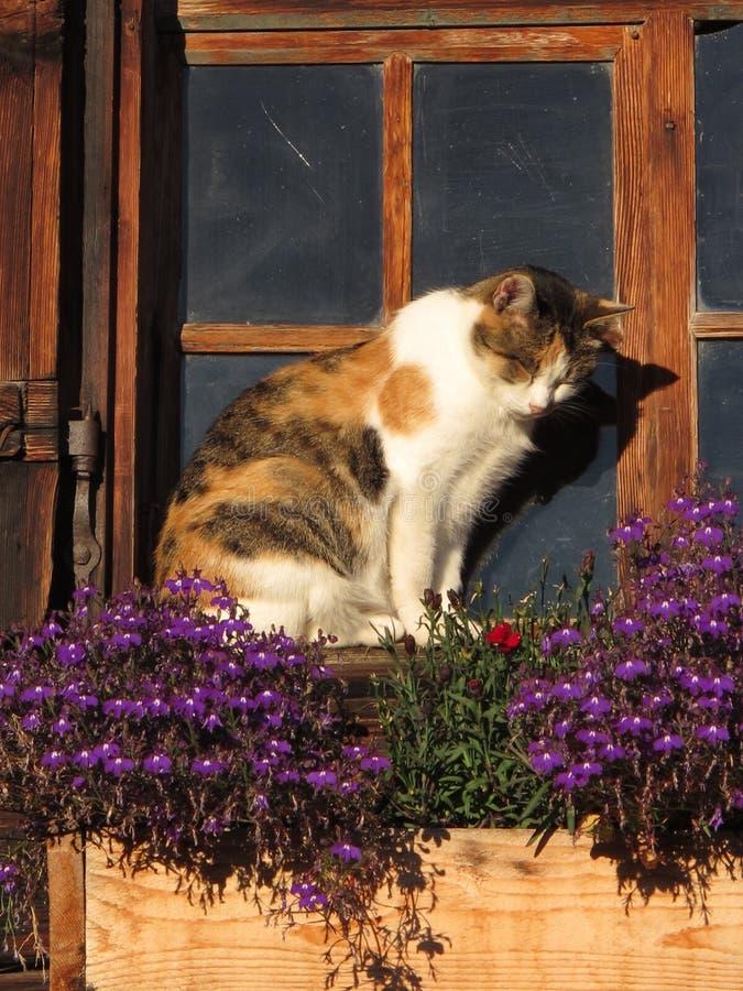 Gato que senta-se na frente de uma janela velha fotos de stock royalty free