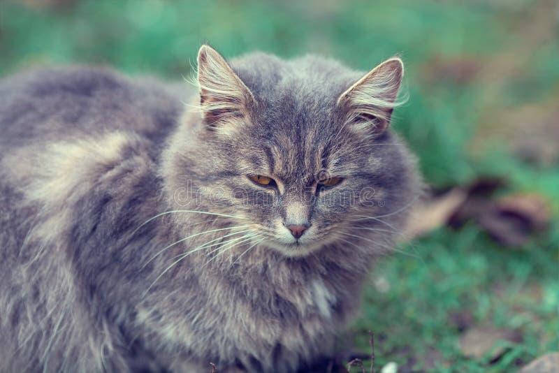 Gato que senta-se na grama na jarda foto de stock royalty free