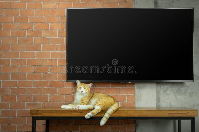 Gato que senta-se na tabela de madeira com a tevê conduzida na parede de tijolo vermelho imagem de stock royalty free