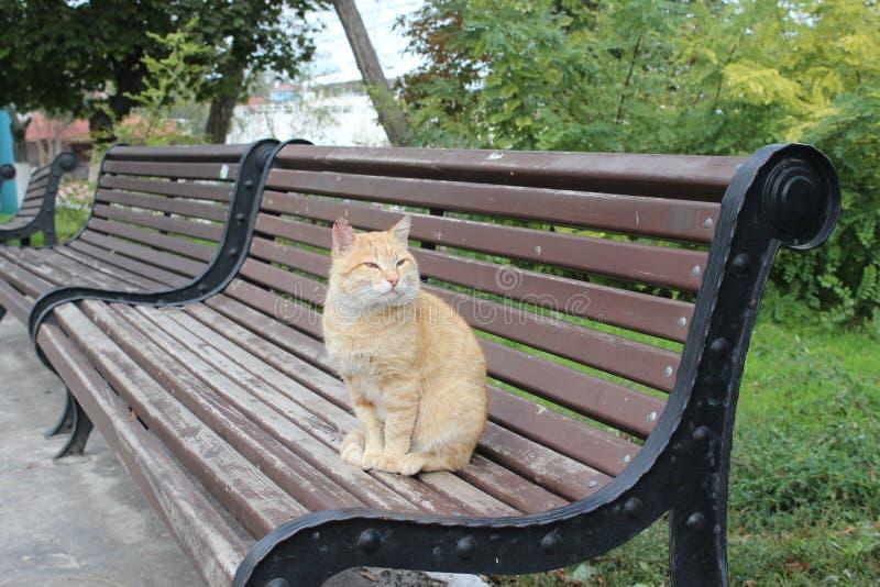 Gato que senta-se no banco imagem de stock