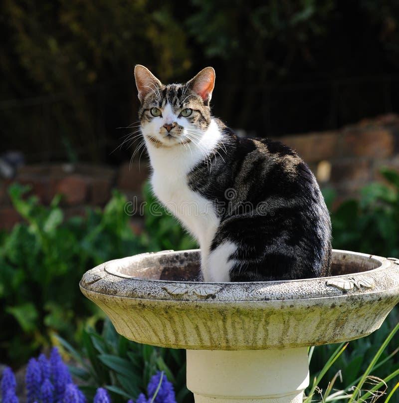 Gato que senta-se no banho do pássaro foto de stock royalty free