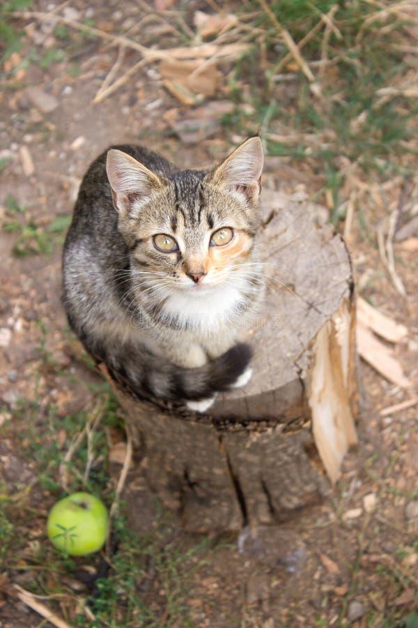 Gato que senta-se no coto Estilo rústico, foco seletivo foto de stock royalty free