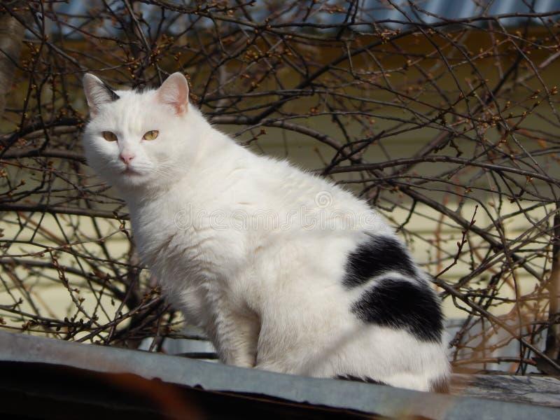 Gato que senta-se no telhado fotografia de stock