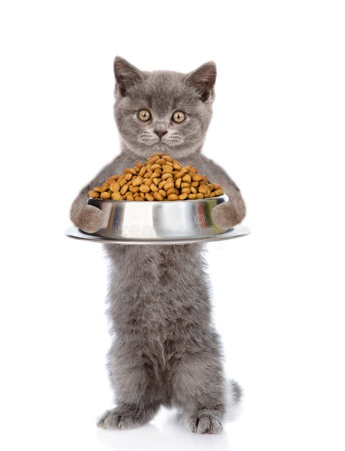 Gato que sostiene el cuenco de comida de perro seca Aislado en el fondo blanco foto de archivo libre de regalías