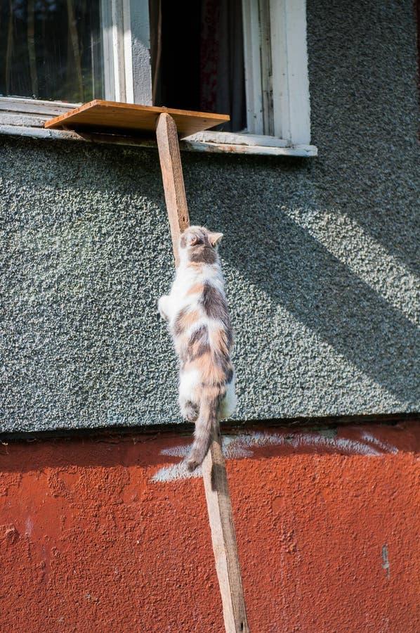 Gato que sube para arriba la escalera que lleva a la ventana imagen de archivo libre de regalías