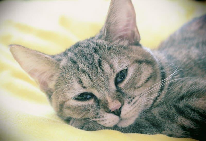 Gato que sueña despierto fotografía de archivo libre de regalías