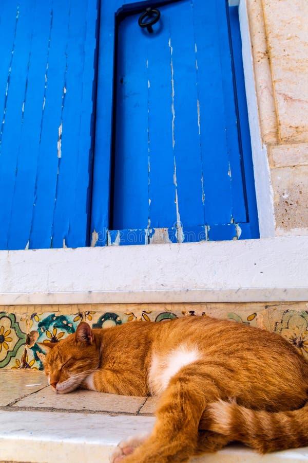 Gato que tem uma sesta fotos de stock royalty free