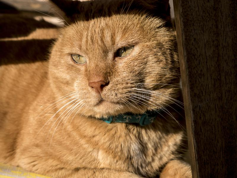 Gato que toma sol no sol fotos de stock