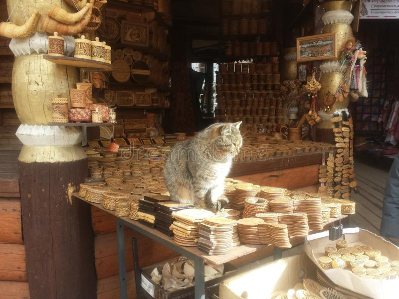 Gato que toma sol nos raios do sol fotografia de stock royalty free