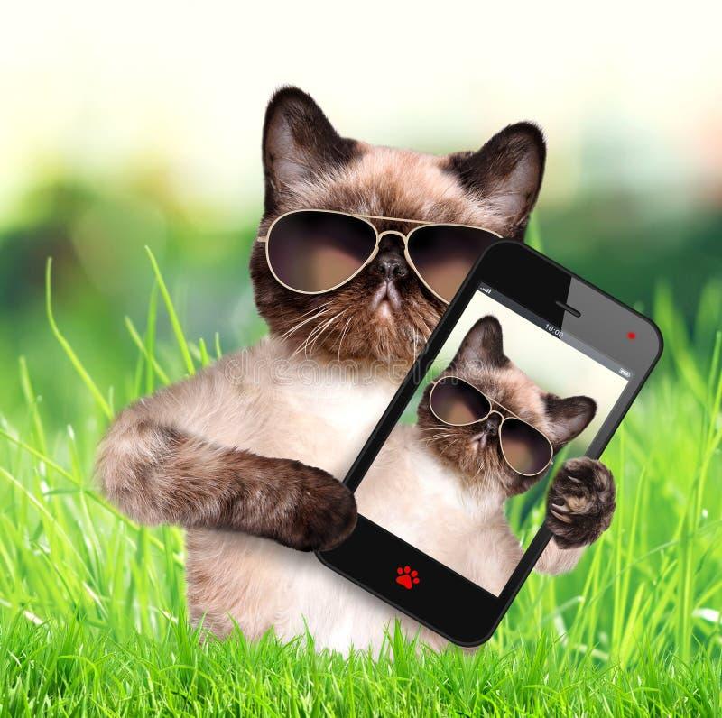 Gato que toma un selfie con un smartphone foto de archivo libre de regalías