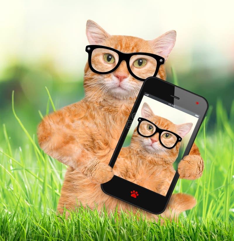 Gato que toma un selfie con un smartphone imagen de archivo libre de regalías