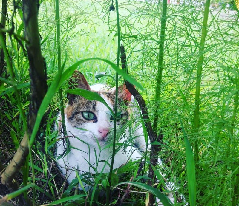Gato que vaga fotos de archivo
