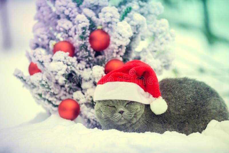Gato que veste o chapéu de Santa perto da árvore de Natal imagem de stock royalty free