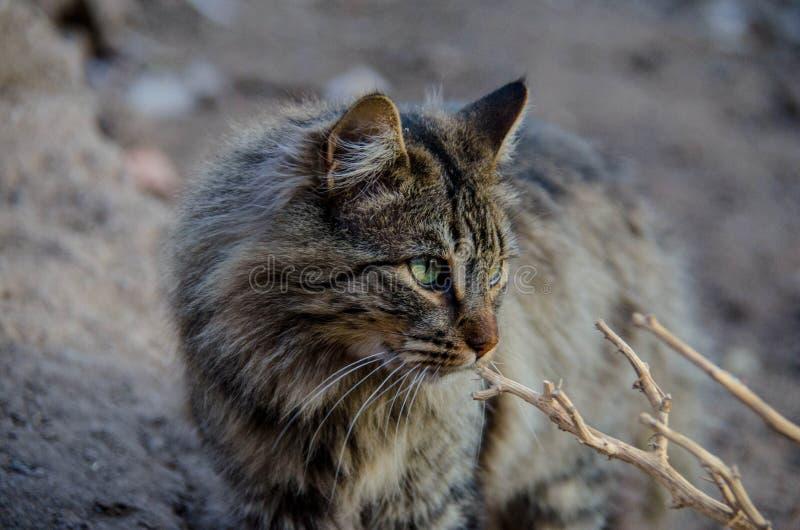 Gato que vive en la granja imagen de archivo