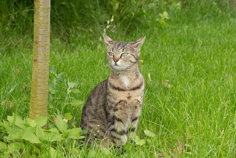 Gato rayado 2 fotos de archivo libres de regalías