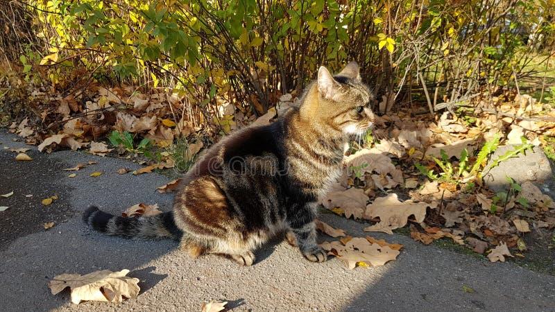 Gato rayado con las hojas de otoño imagen de archivo