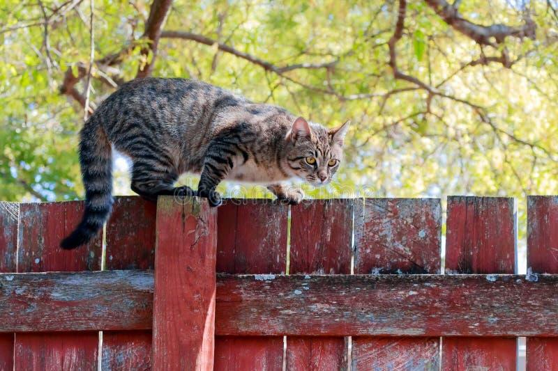Gato rayado en la cerca roja foto de archivo