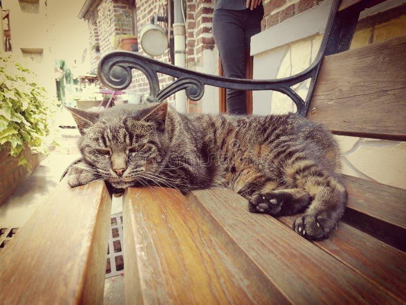 Gato rayado estirado fotos de archivo libres de regalías