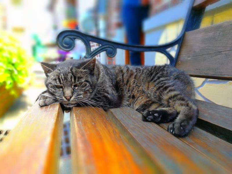 Gato rayado estirado fotos de archivo