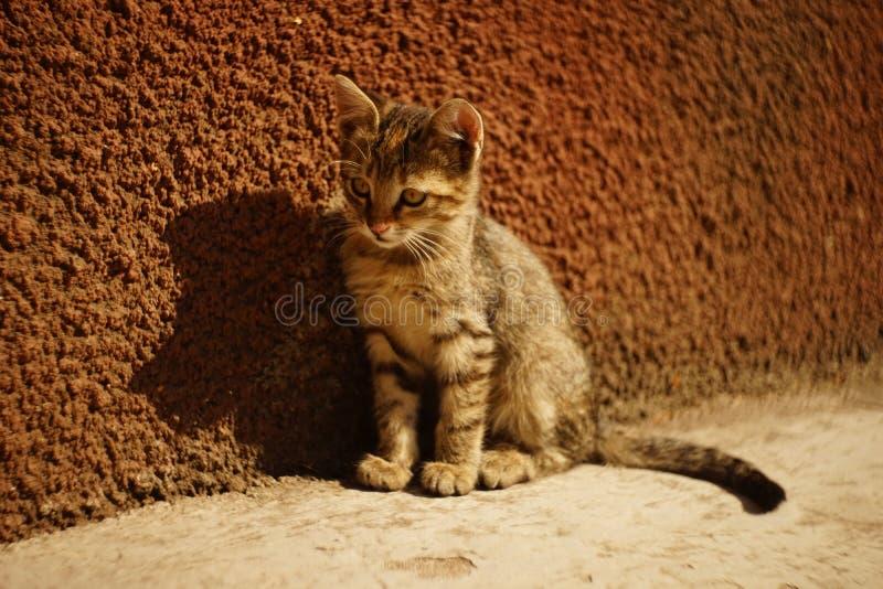 Gato risado sentado no chão de uma pedra num dia ensolarado, luz do sol e sombra, pequeno retrato de gato de mesa ao ar livre imagem de stock