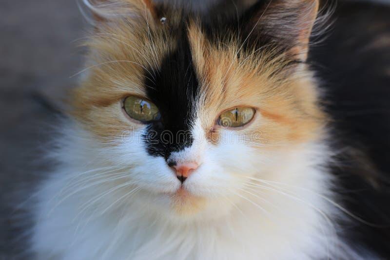 Gato rojo Animales domésticos de la casa Un animal mestizo imágenes de archivo libres de regalías