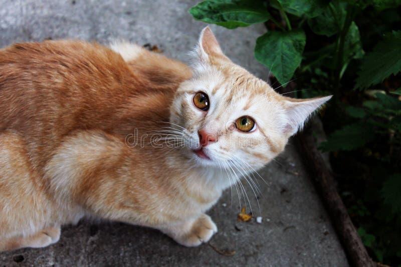 Gato rojo asustado en el jardín imágenes de archivo libres de regalías