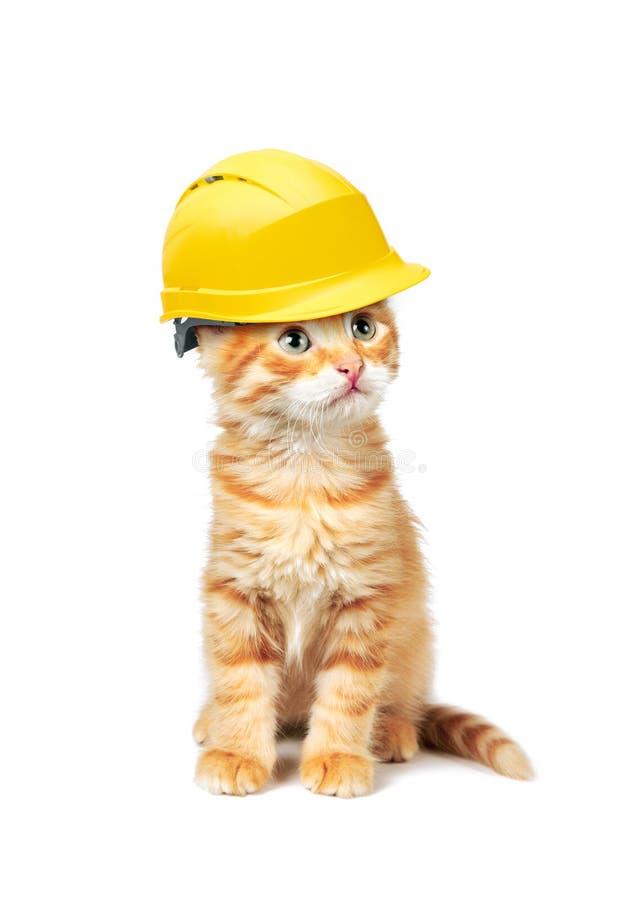Gato rojo con el casco imagen de archivo libre de regalías
