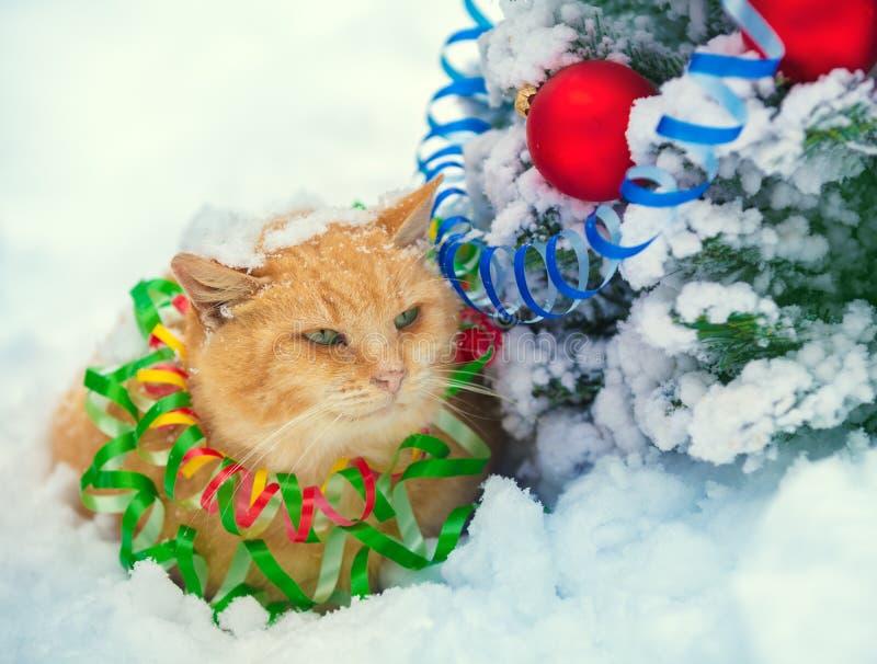 Gato rojo enredado en la flámula colorida imagen de archivo libre de regalías