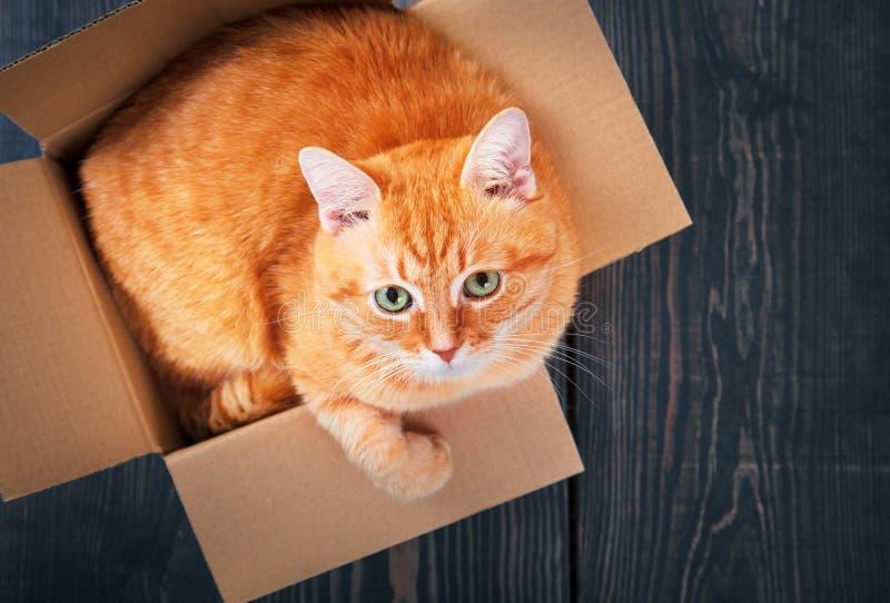 Gato rojo lindo en una caja de cartón imágenes de archivo libres de regalías
