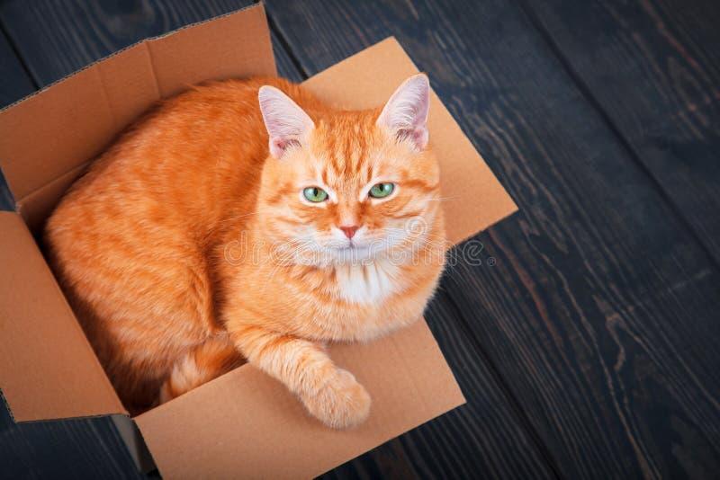 Gato rojo lindo en una caja de cartón foto de archivo