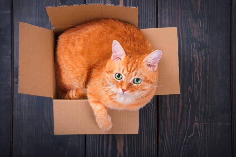 Gato rojo lindo en una caja de cartón imagen de archivo