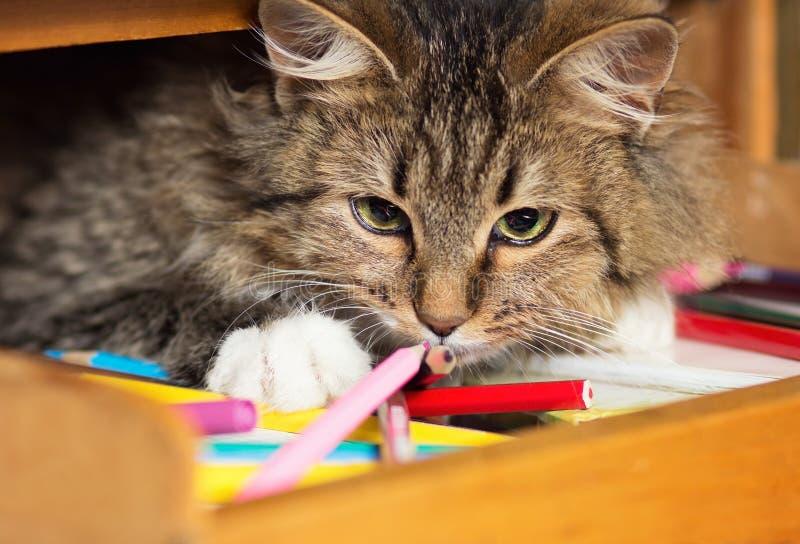 Gato rojo lindo que miente en un estante con los lápices coloreados fotos de archivo libres de regalías