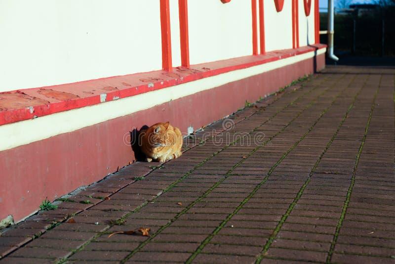 Gato rojo que se sienta cerca del edificio imagenes de archivo