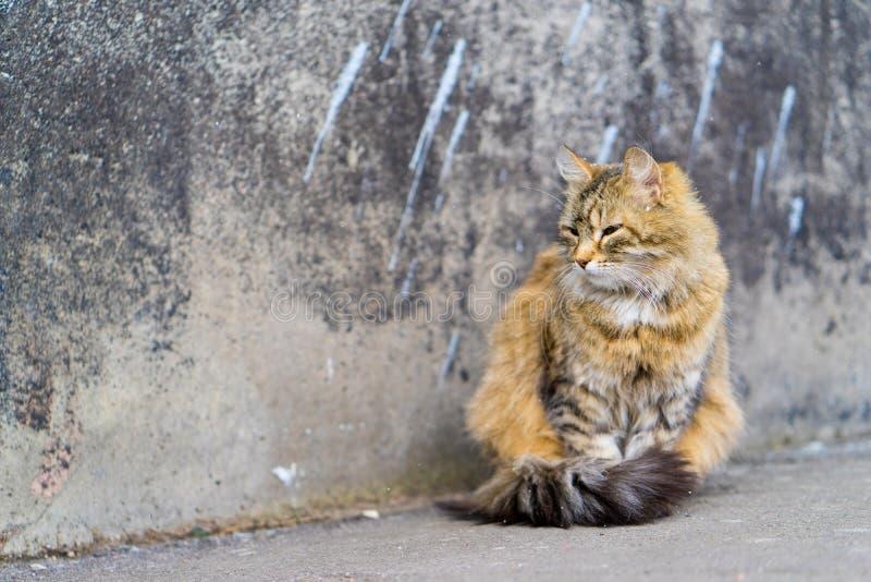 Gato rojo que se sienta en el pavimento imagenes de archivo